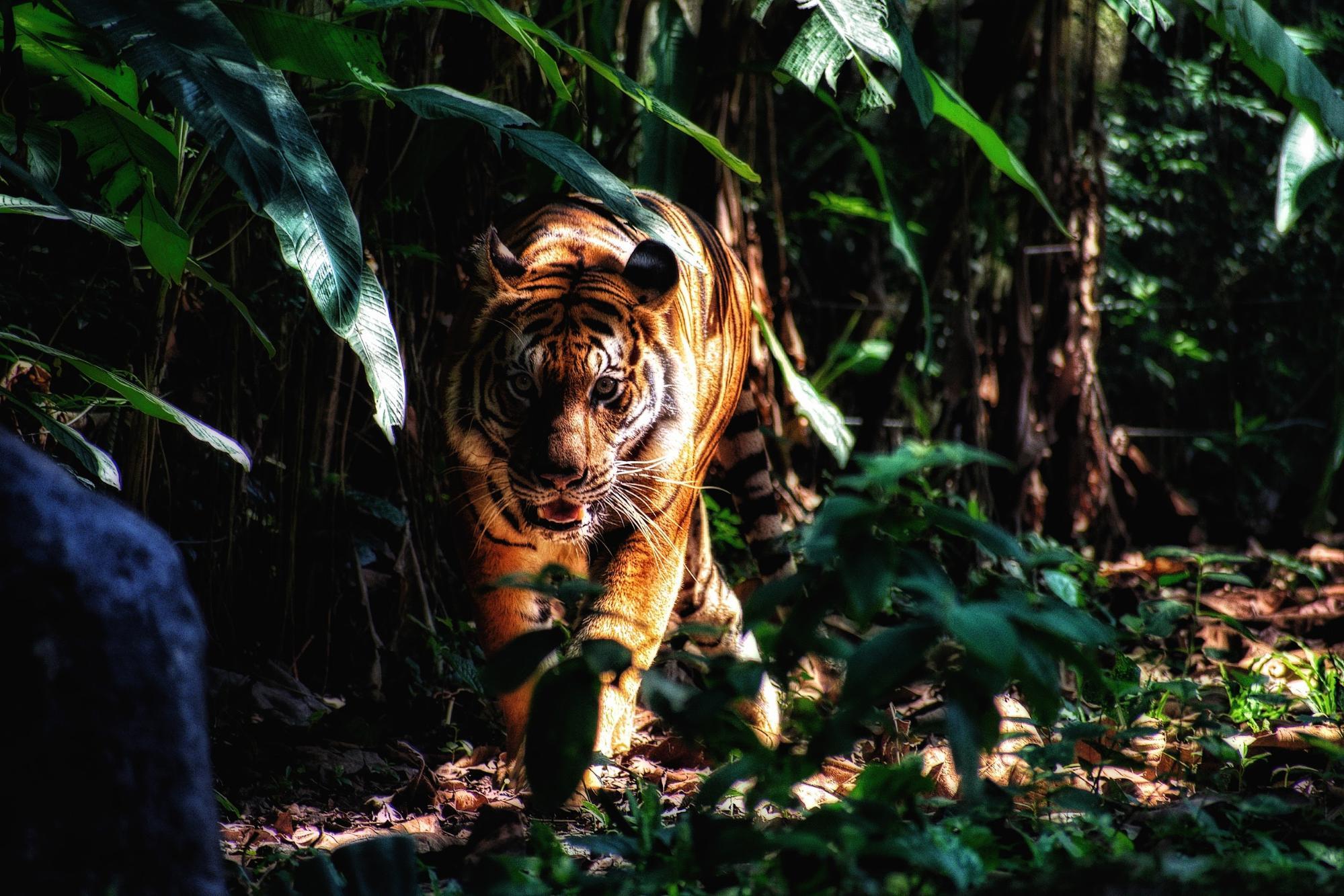 小説の書き方は名作から盗める・山月記の虎