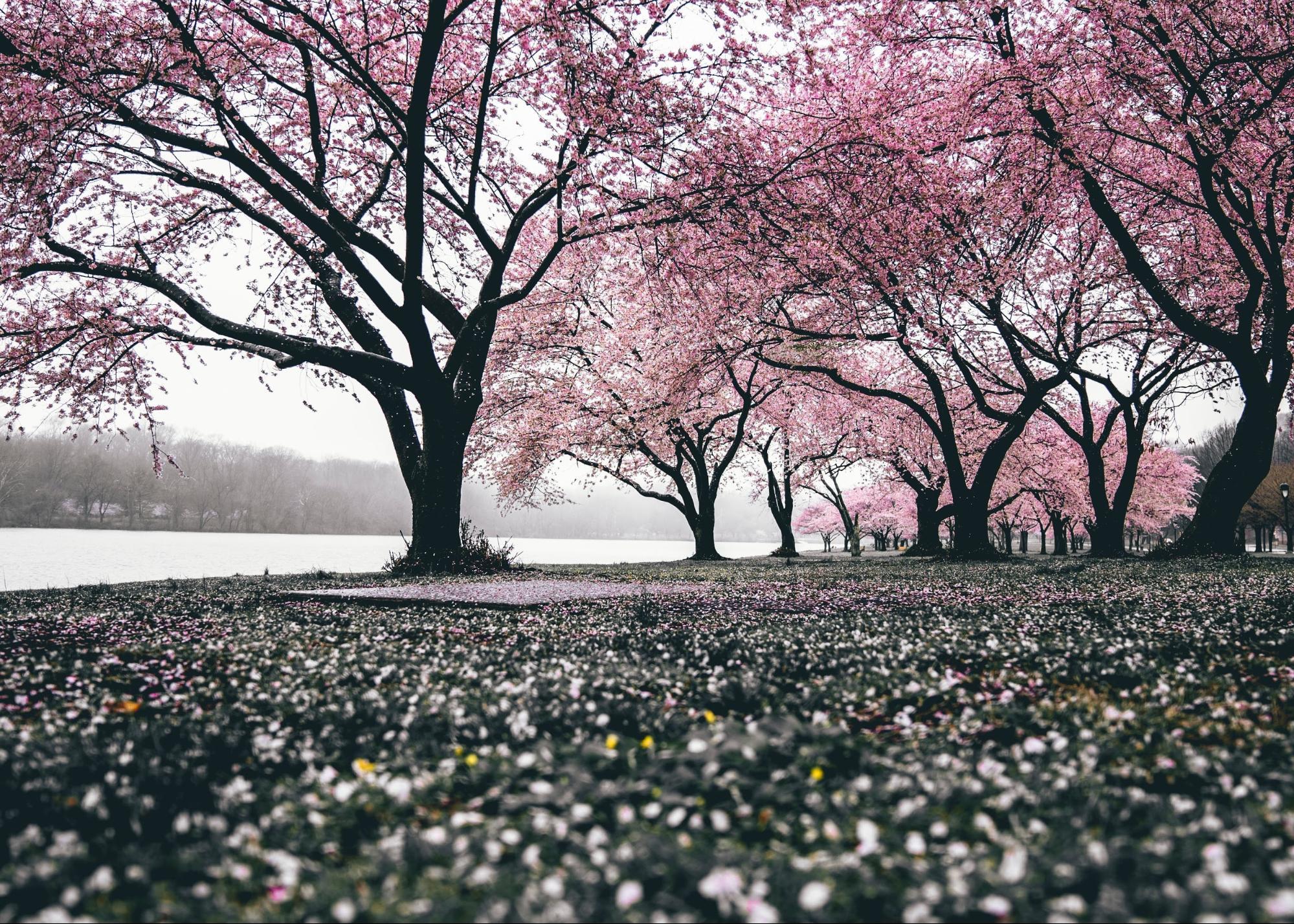 小説の書き方は名作から盗める・桜の森の満開の下